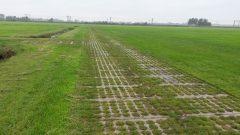 Gras betonplaten SIMgras